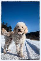 Rolly, der Schneeliebhaber