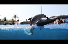 romancing dolphins in Marineland - Mallorca