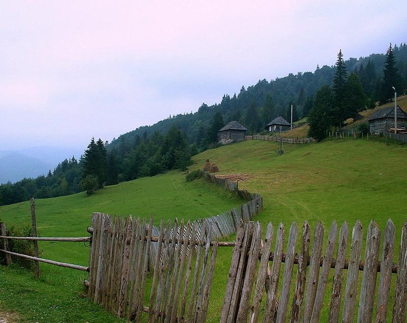 romanian green