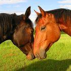 Romantic Stallions