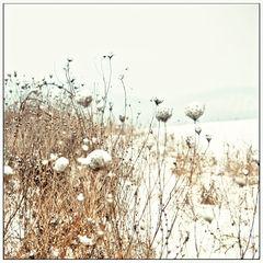 * romantic winter *