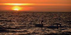 Romantik auf der Insel Hiddensee