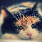 Romantische Katze