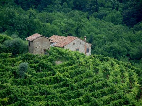 romantischer, einsamer Weinbau