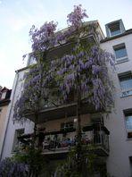Romantisches Mainz 1