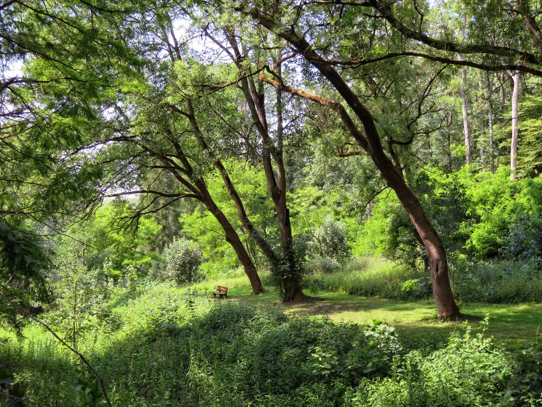 Rombergpark 13