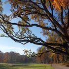 Rombergpark 4