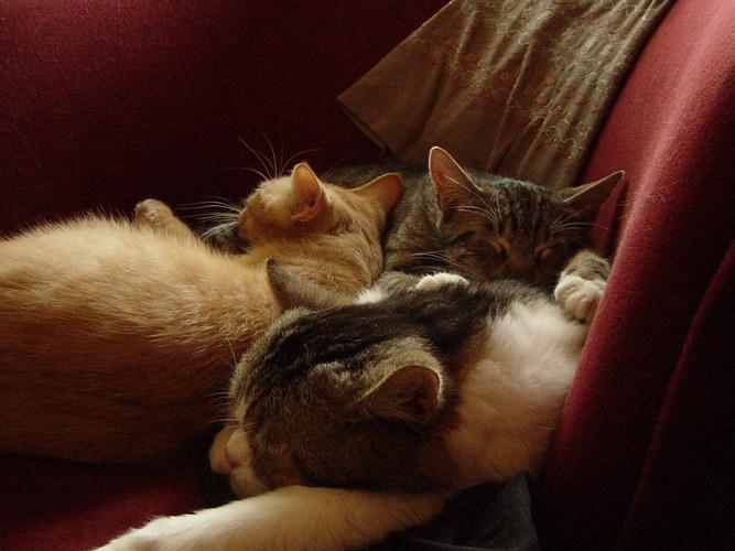 Romeo, Ben und Buddy