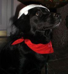 Ronja der Weihnachtself 2