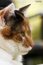 Ronja - Meine Hauskatze