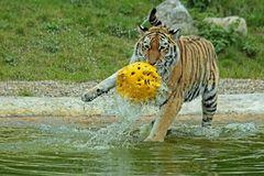 Ronja spielt Wasserball