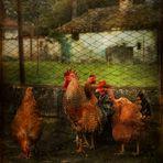 Rosa, Bianchina, Violetta  e Cesare il gallo