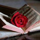 Rosa e Poesia...
