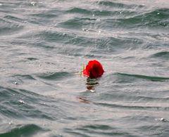 Rosa en la mar
