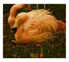 Rosa Flamingopaar