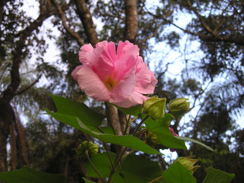 Rosa Mística