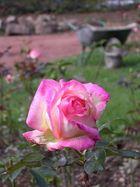 Rosa 'Permoser'
