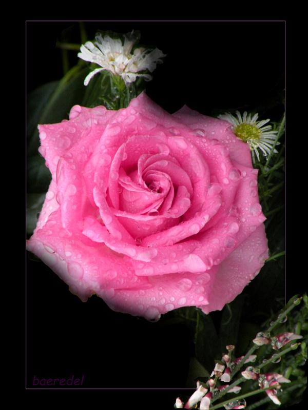* rosa Röslein ... wollte nicht allein sein *