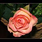 Rosa rosa..per gli amici.