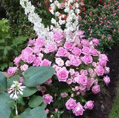 rosa Rosen-Gesteck