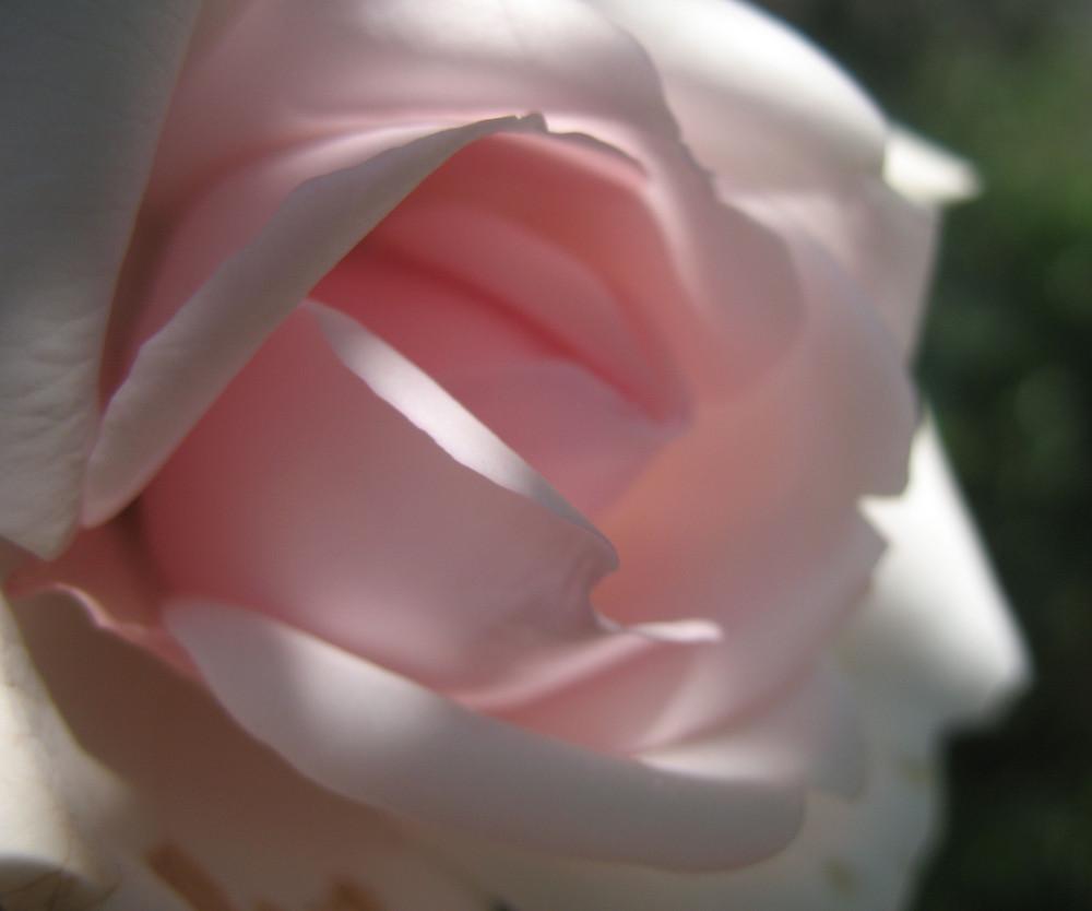Rosa Samt