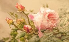 Rosa    Tenue