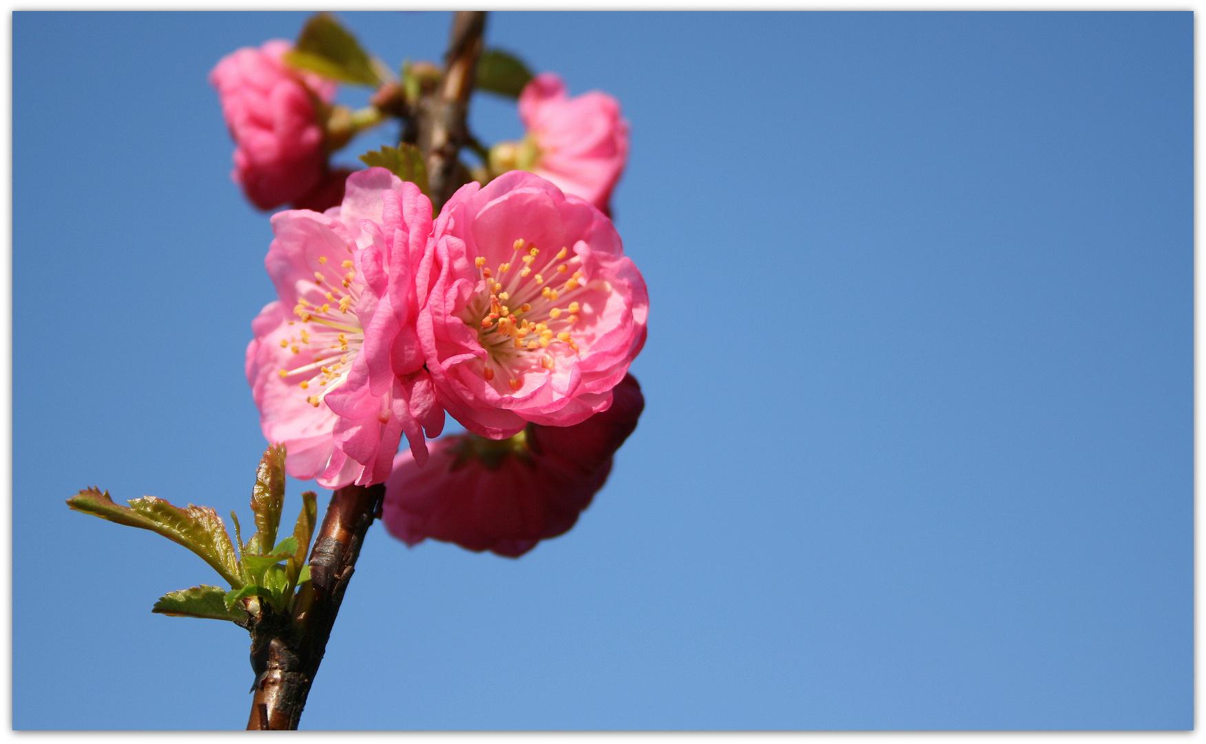 rosa und himmelblau ...