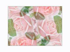 Rosarote Rosenträume