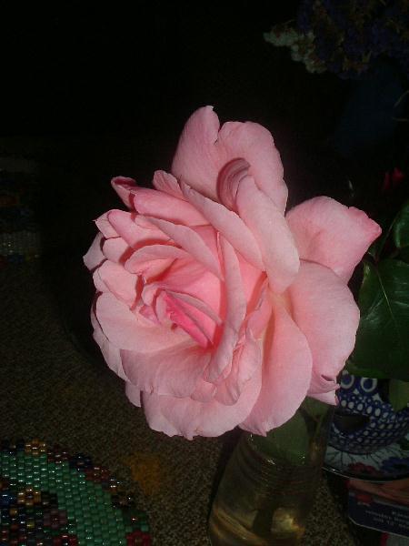 RosaroteROSE