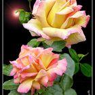 rosas con destello