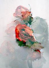 Rosas difusas