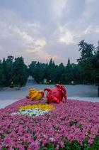 Rosas en el Templo del Cielo