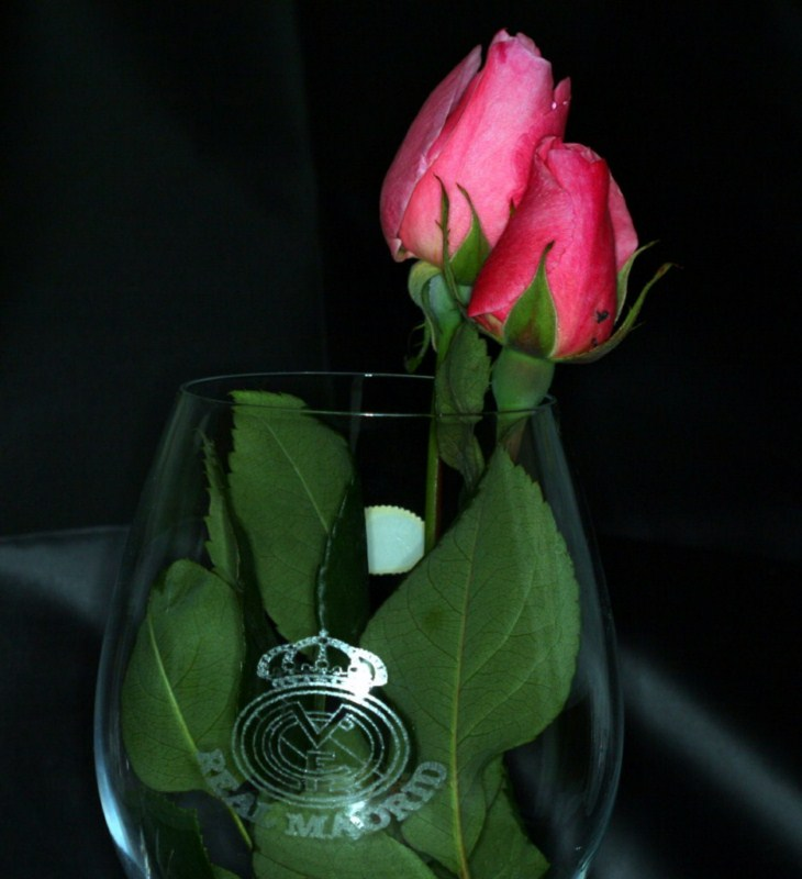 Rosas Reales
