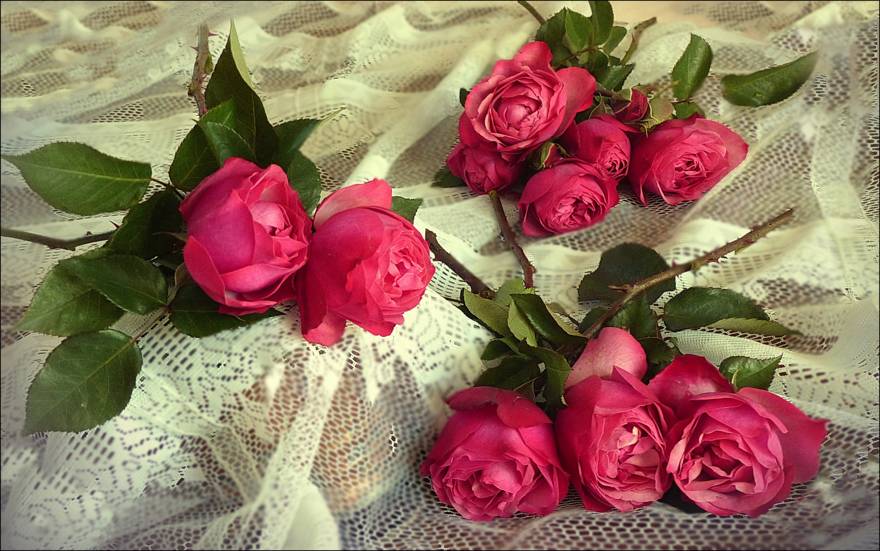 Rosas ,Rosas