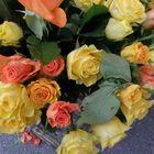 Rosas y mais rosas!