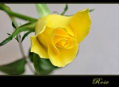 ROSE -2-
