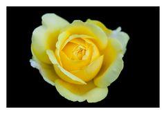 Rose-2012Fall-2