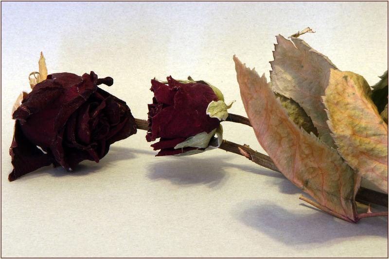 Rose appassite.....