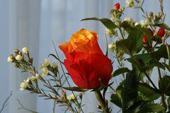 Rose aus dem Home-Studio