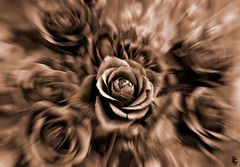 Rose con un pizzico di fantasia