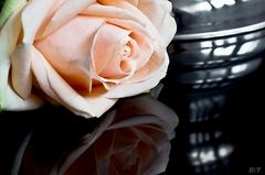 Rose - Die Freude hält weiter an