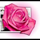 Rose, different