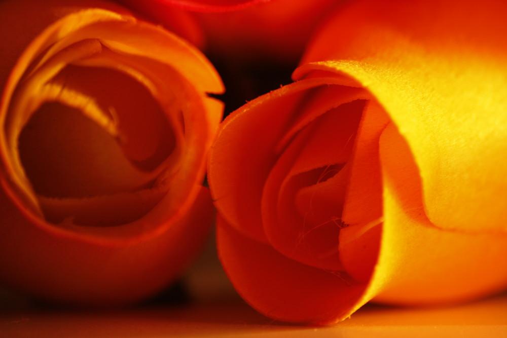 rose dorate