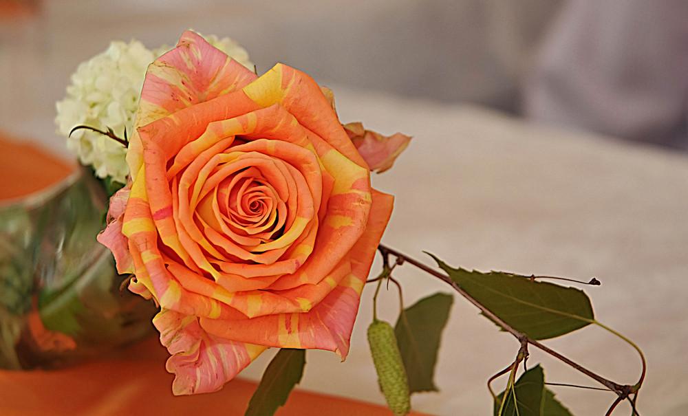 ° Rose for a rose °