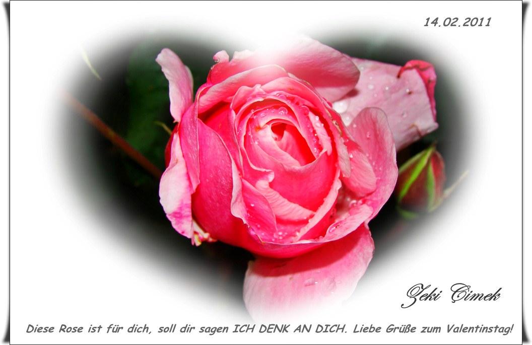 ****** Rose für dich ******