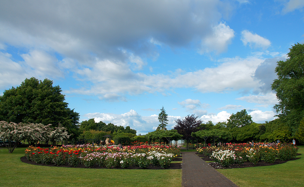..Rose Garden..