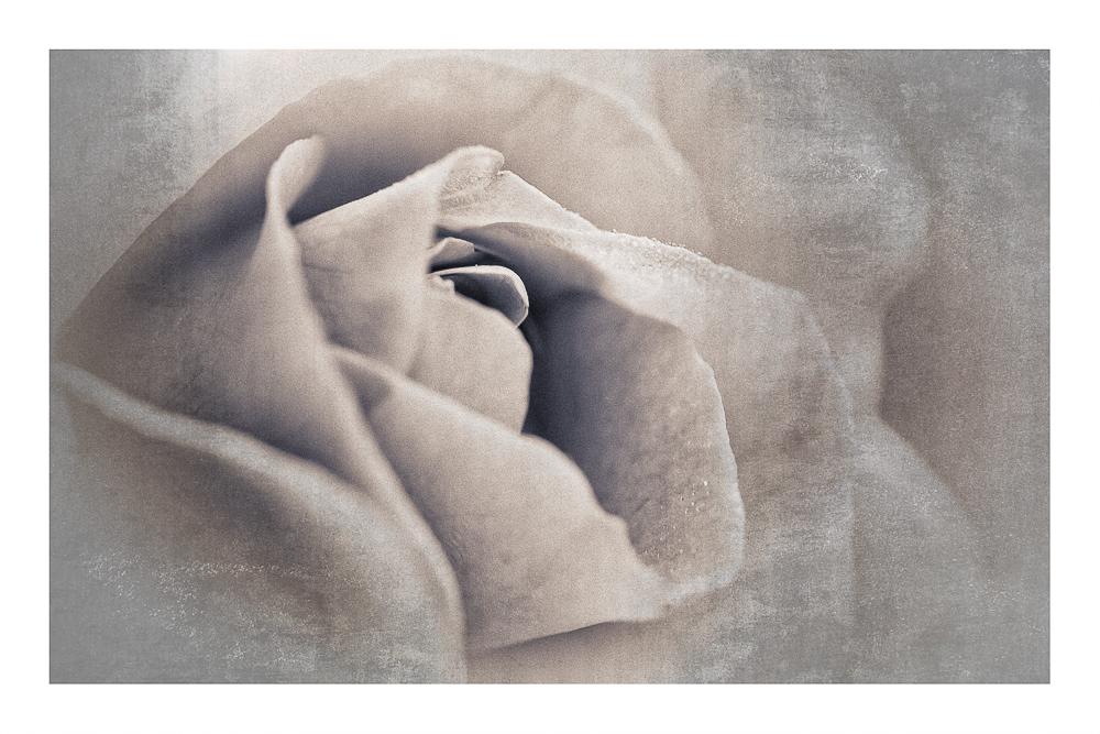 Rose im Fresko-Stil