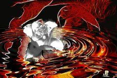 Rose im Rosenteich