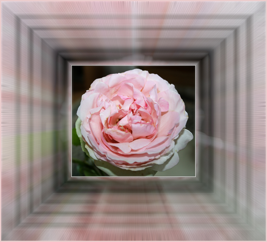 Rose im Tunnel-look