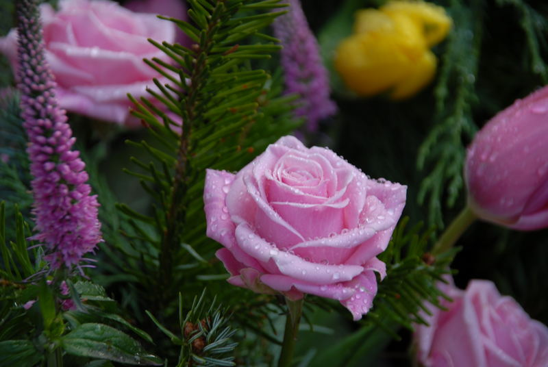 Rose in Rosé